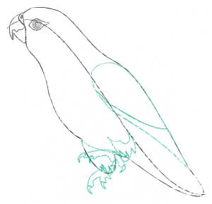 risuem-parrot-3