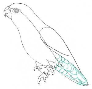 risuem-parrot-4