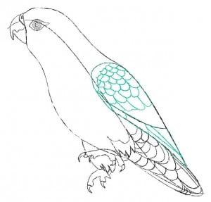 risuem-parrot-5