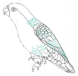 risuem-parrot-6