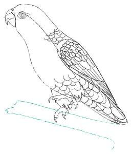 risuem-parrot-7