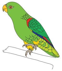 risuem-parrot-9