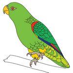 risuem-parrot-9-mini