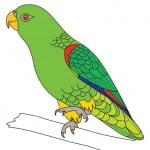 Как нарисовать волнистого попугая карандашом поэтапно
