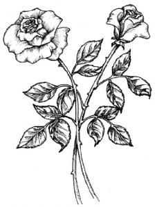 risuem-flowers-0