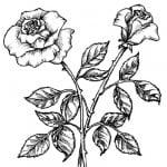 Как правильно нарисовать цветы карандашом поэтапно