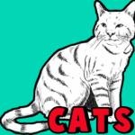 Как рисовать кошку карандашом поэтапно
