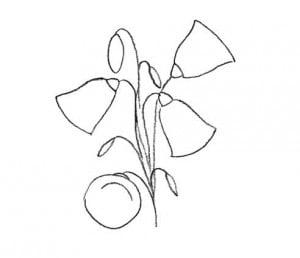 как нарисовать цветы колокольчики карандашом