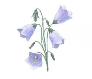 risuem-cvetok-kolokolchik-5