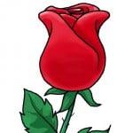 Как легко нарисовать розу поэтапно карандашом, для начинающих
