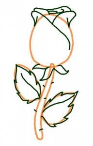 как нарисовать розу для начинающих