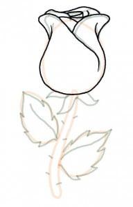 как легко нарисовать розу поэтапно