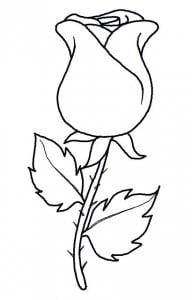 как легко нарисовать розу карандашом