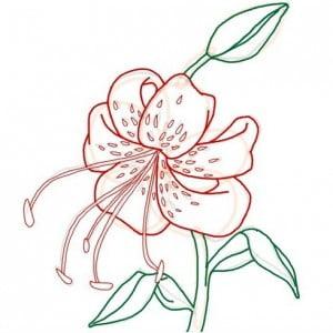 risuem-tigrovuu-liliu-08