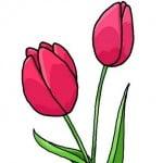 Как нарисовать красивый тюльпан карандашом поэтапно