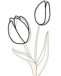 как рисовать тюльпан карандашом