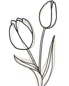 как красиво нарисовать тюльпан
