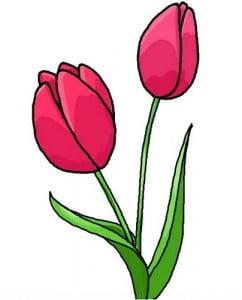 как нарисовать тюльпан красками