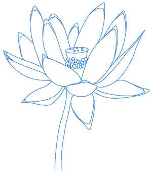 Как нарисовать лотос карандашом поэтапно