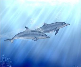 как красиво нарисовать дельфина