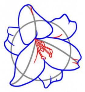 как легко нарисовать лилию
