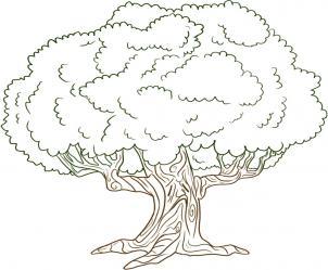 как нарисовать дерево дуб
